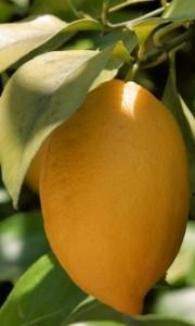 fruta-para-mermelada