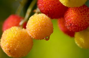 frutas-sislvestres-para-mermelada