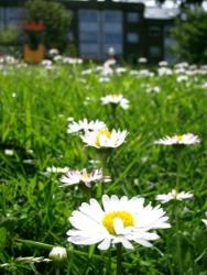 plantas-jardin-eco