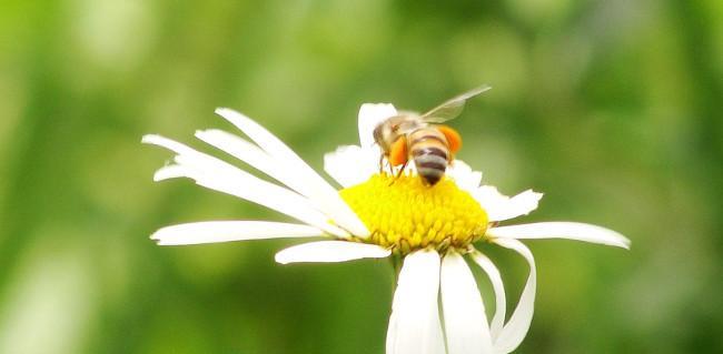 sos-abejas